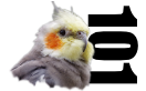 Cockatiel Advice and First Aid 101